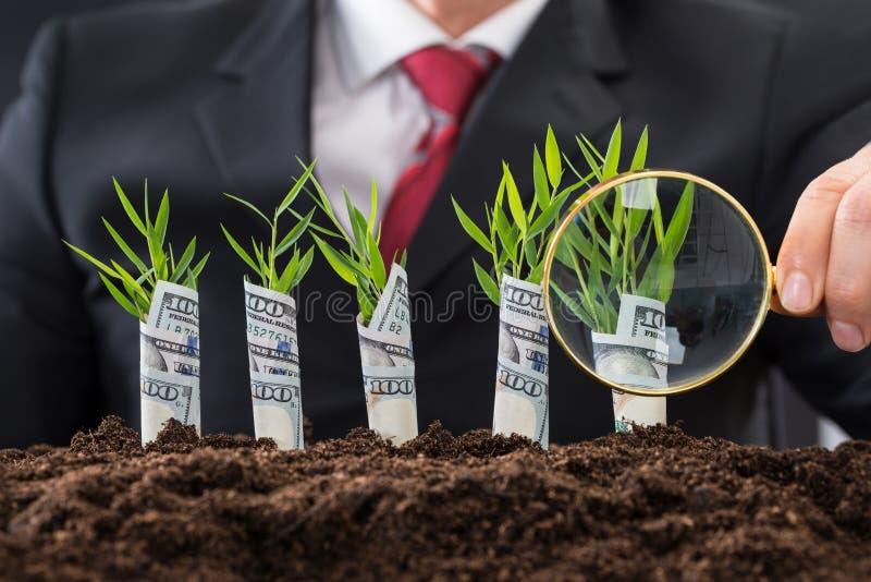 Hombre de negocios que sostiene la lupa delante de las plantas de dinero imagenes de archivo