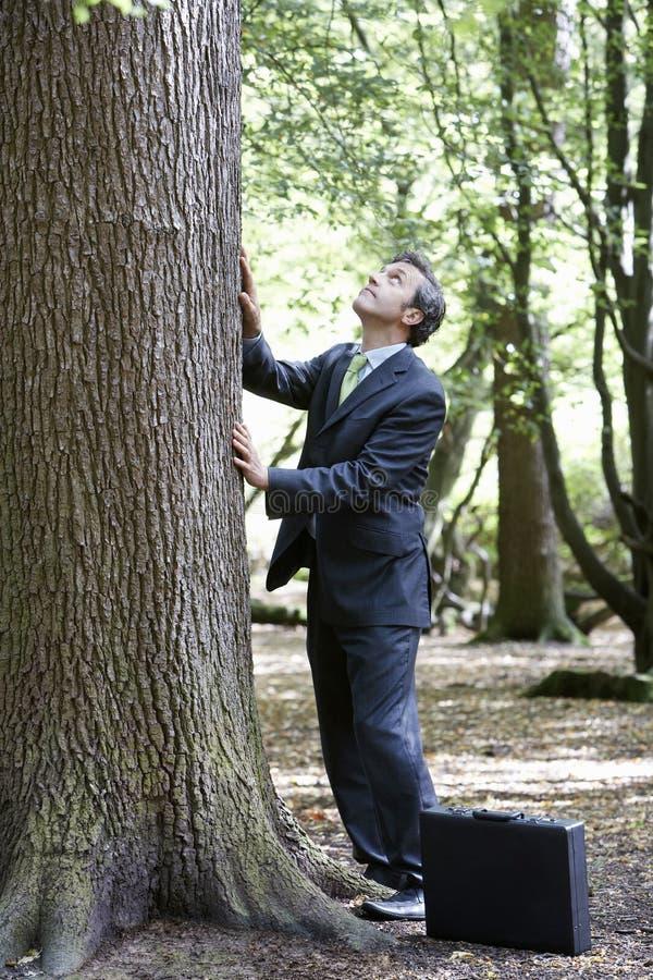 Hombre de negocios Stroking Tree Trunk en bosque imagen de archivo