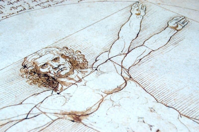Hombre de Vitruvian imagenes de archivo