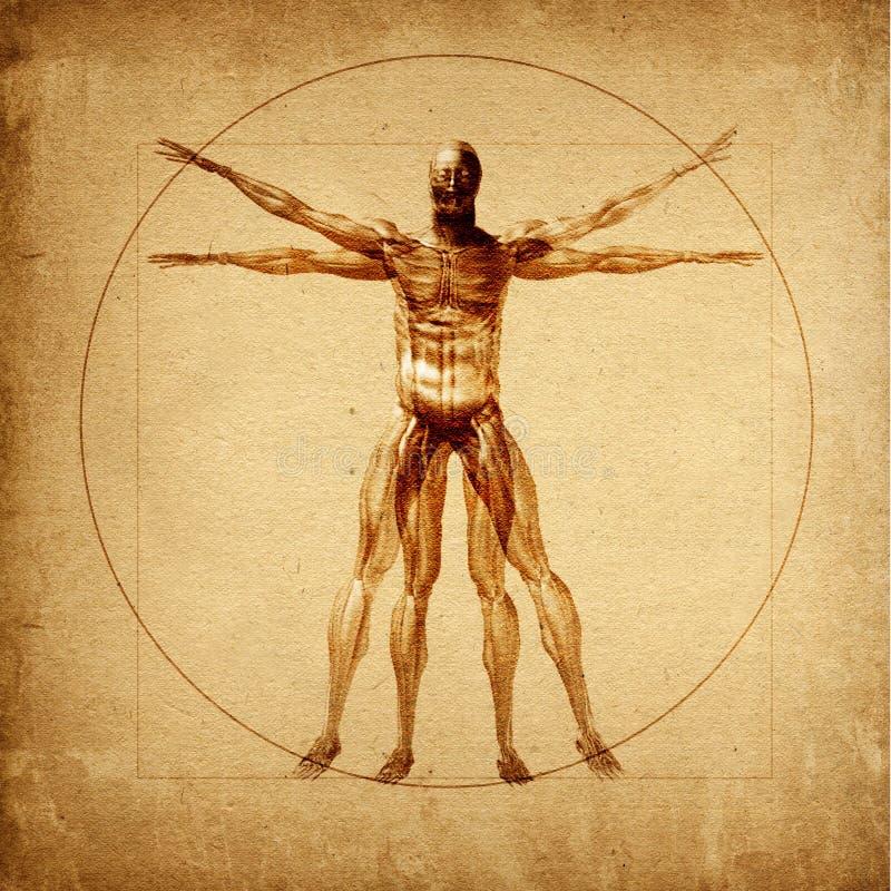 Hombre de Vitruvian de Leonardo ilustración del vector