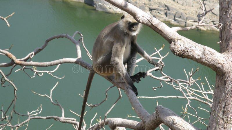 Hombre del mono fotografía de archivo