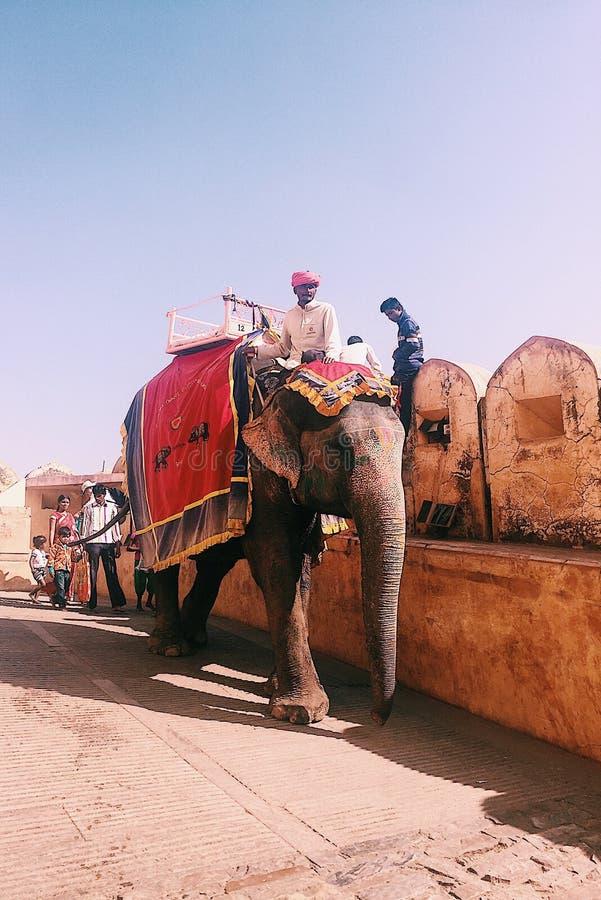 Hombre del turbante que camina su elefante en Amber Palace In Jaipur imagen de archivo