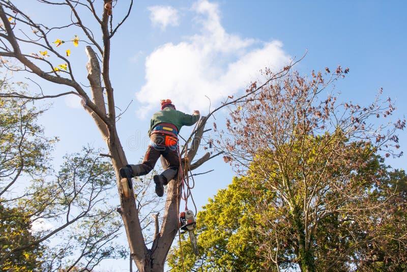 Hombre en dos troncos de árbol fotos de archivo libres de regalías