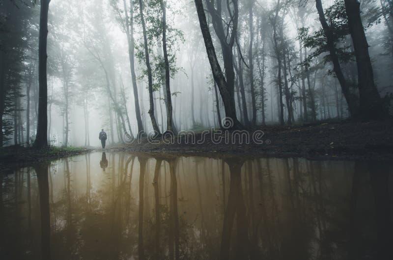 Hombre en el borde del lago del bosque imagen de archivo
