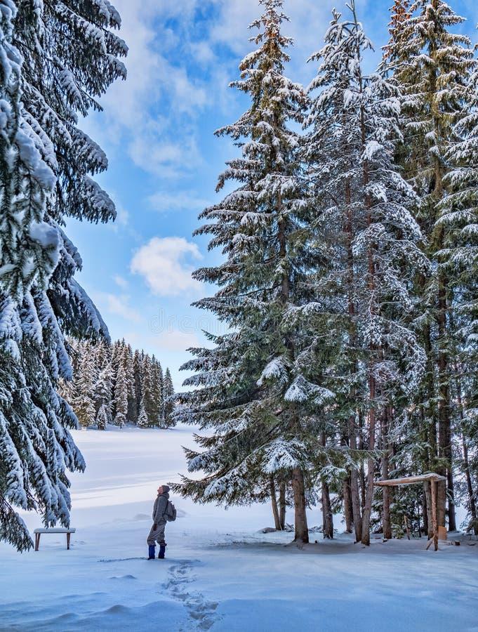 Hombre en el bosque en las montañas de Rhodope, Bulgaria del invierno imagen de archivo