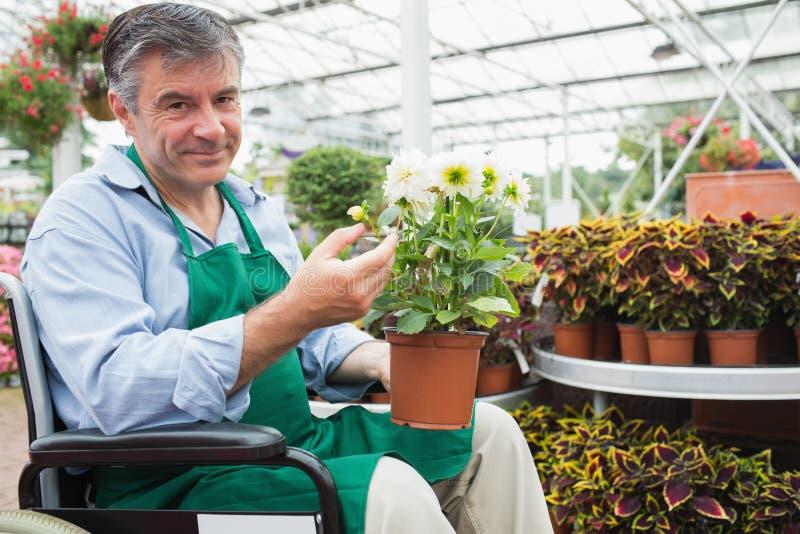 Hombre en una silla de ruedas que sostiene una maceta en un invernadero foto de archivo libre de regalías