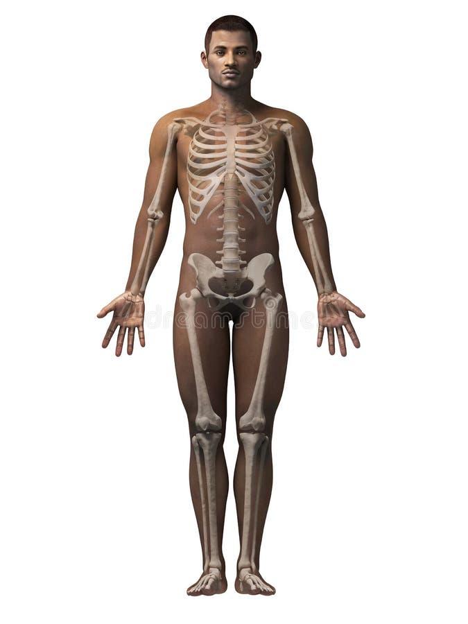 Hombre esqueleto stock de ilustracin Ilustracin de africano