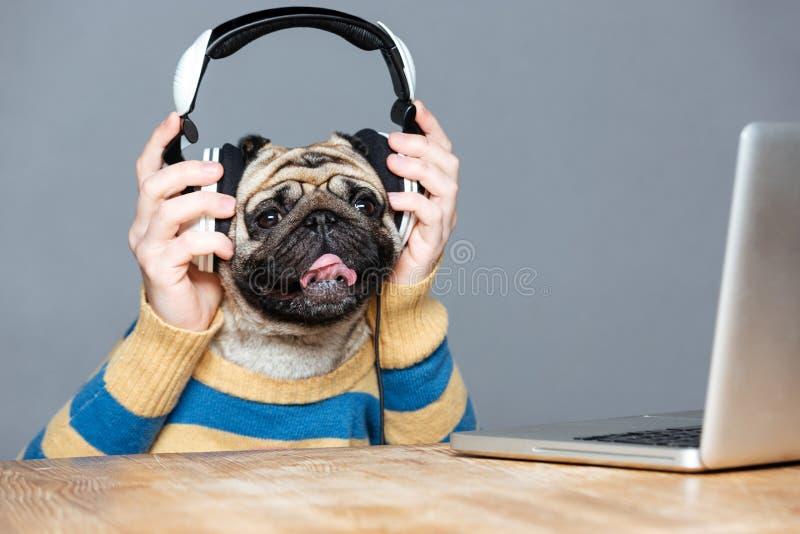 Hombre feliz con la cabeza de perro del barro amasado en auriculares usando el ordenador portátil imagen de archivo