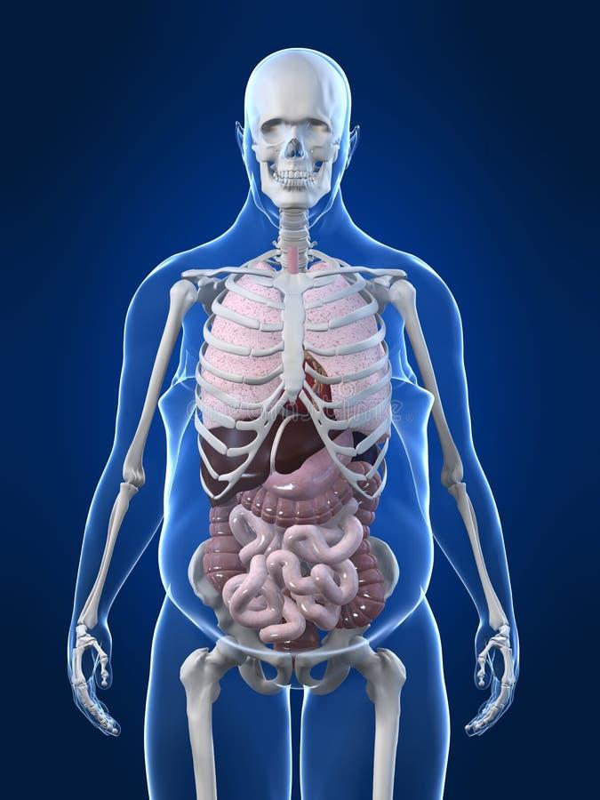 Hombre gordo - órganos ilustración del vector