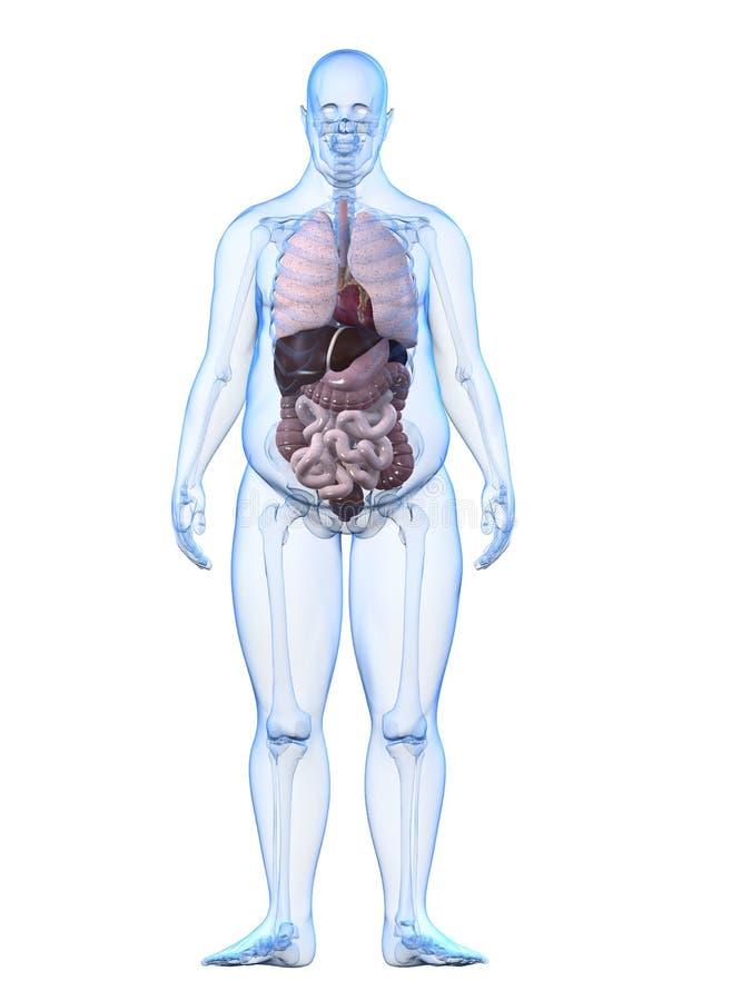 Hombre gordo - órganos libre illustration