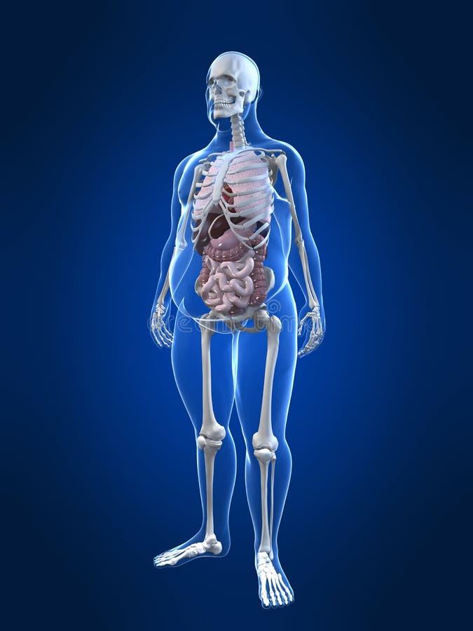 Hombre gordo - anatomía stock de ilustración. Ilustración de ...