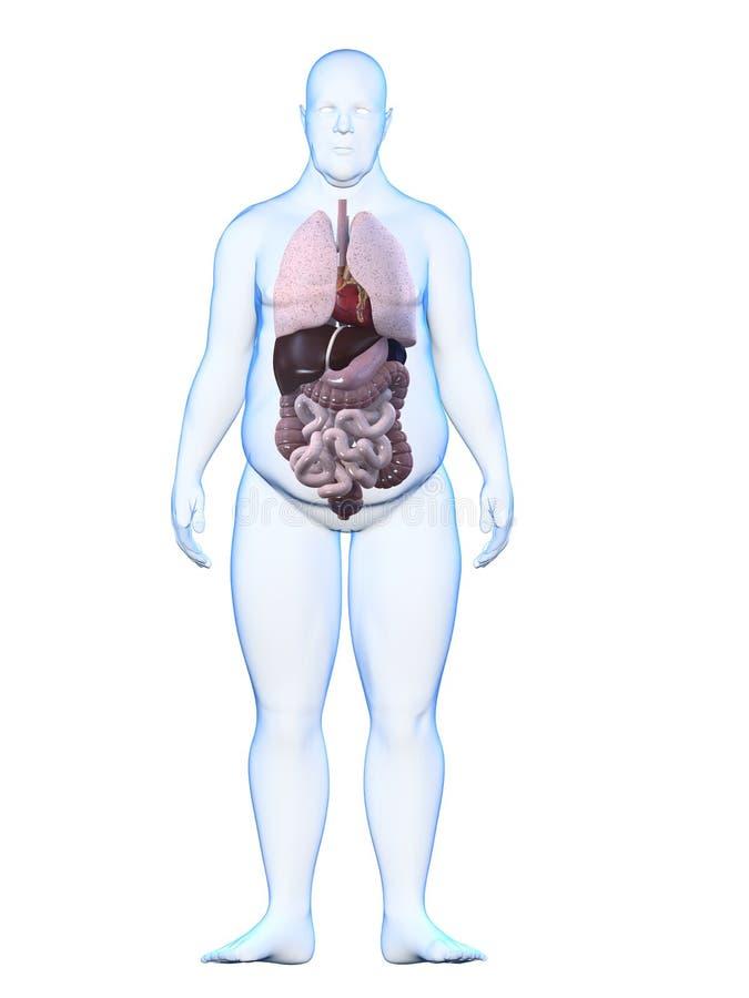 Hombre gordo - anatomía ilustración del vector
