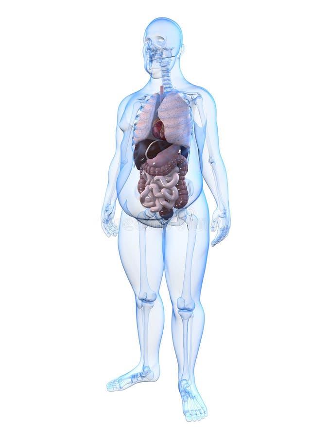 Hombre gordo - anatomía stock de ilustración