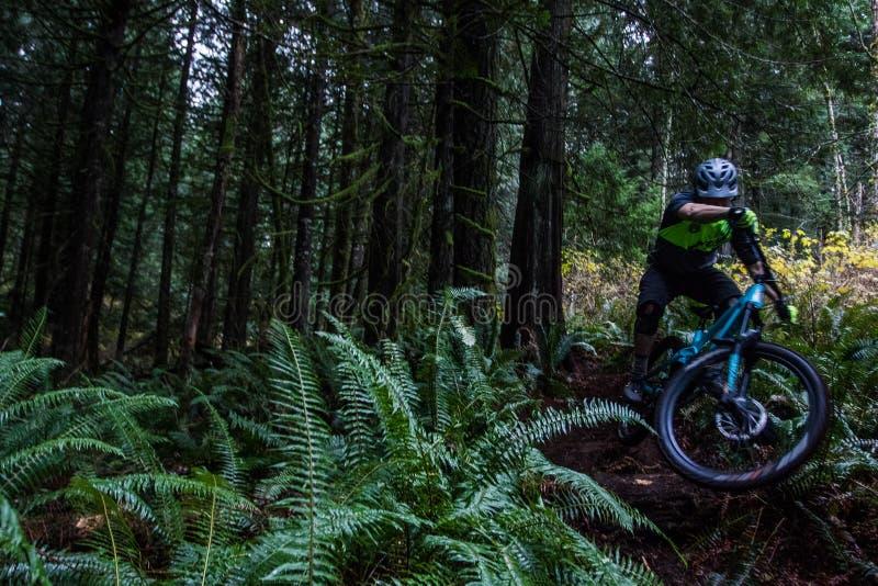 Hombre joven en la bici de montaña foto de archivo