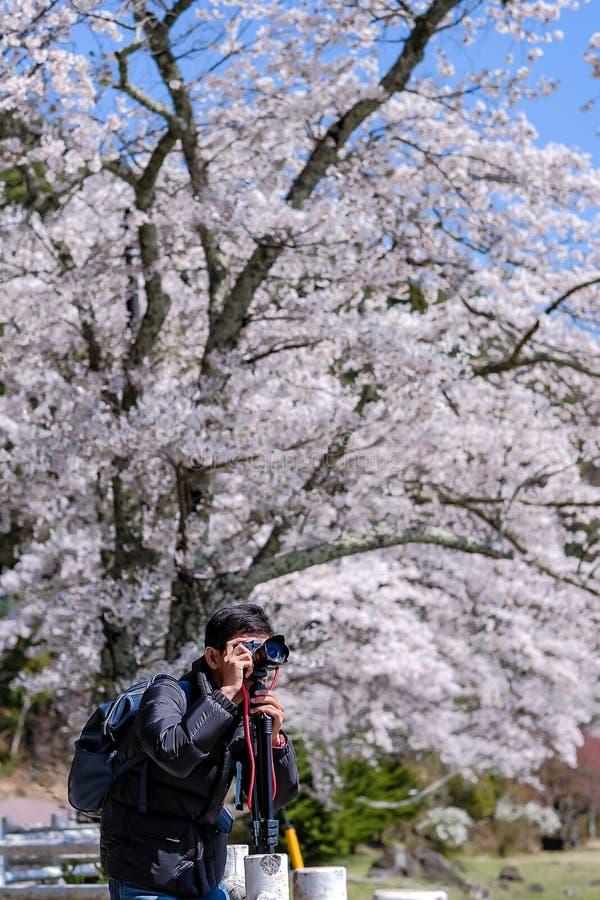 Hombre joven feliz que viaja para tomar una foto con el rosa hermoso Cherry Blossom en el lago Kawaguchiko, Yamanashi Estación de fotografía de archivo