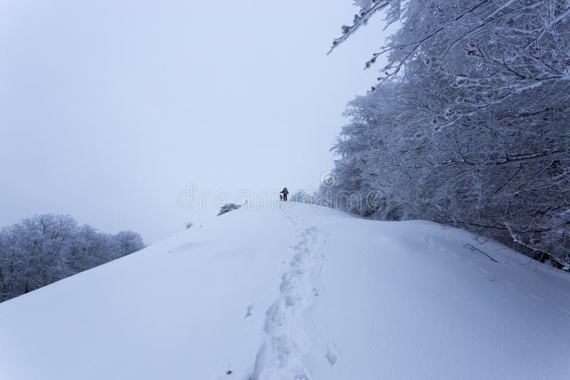 Hombre joven y su perro que caminan con condiciones de niebla en las montañas de Rumania imágenes de archivo libres de regalías