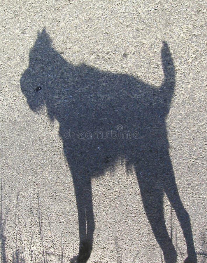 Hombre lobo minúsculo foto de archivo libre de regalías
