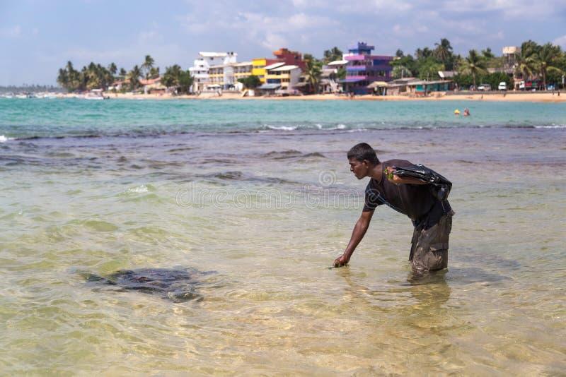 Hombre local que recoge alga marina imagenes de archivo