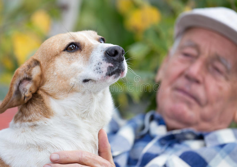 Hombre mayor con el perro en patio imágenes de archivo libres de regalías