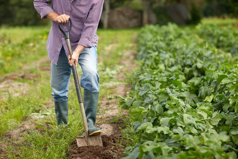 Hombre mayor con la cama o la granja de excavación del jardín de la pala fotos de archivo libres de regalías