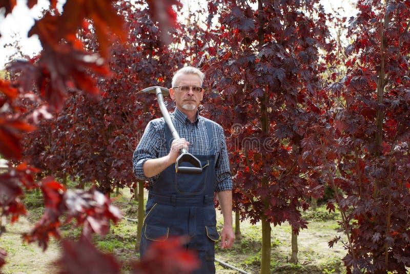 Hombre mayor hermoso que cultiva un huerto sosteniendo una pala en el jardín fotos de archivo libres de regalías