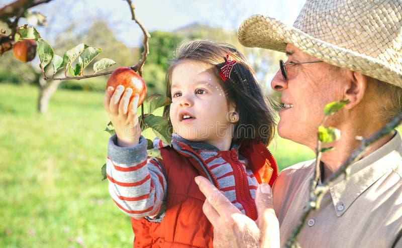 Hombre mayor que celebra la cosecha adorable de la niña fotografía de archivo