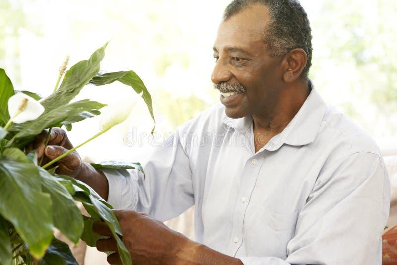 Hombre mayor que se ocupa el Houseplant imagenes de archivo