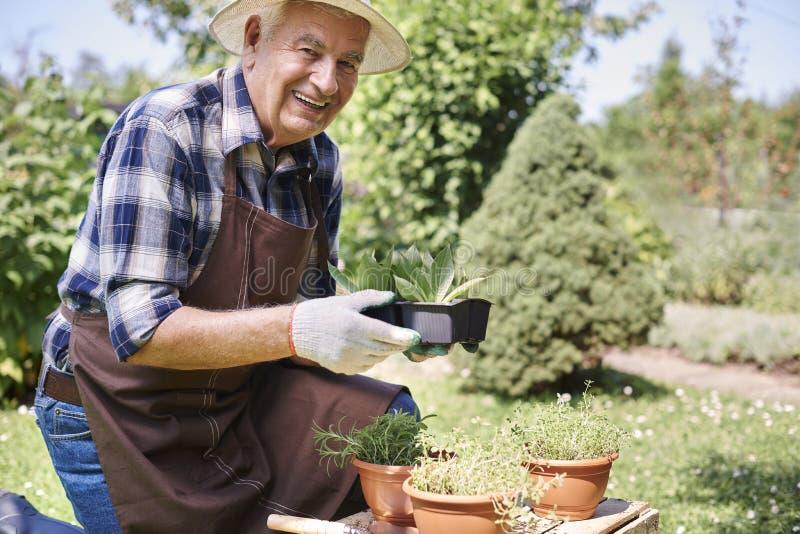 Hombre mayor que trabaja en jardín imagen de archivo libre de regalías