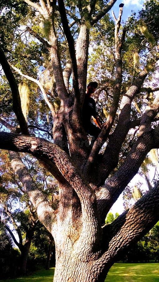 Hombre misterioso del árbol foto de archivo libre de regalías