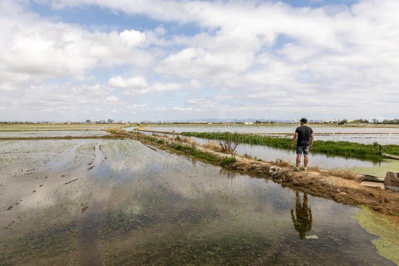 Hombre observando los campos del arroz cerca de Valencia fotos de archivo libres de regalías
