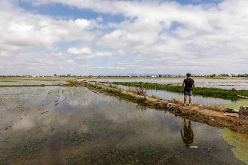 Hombre observando los campos del arroz cerca de Valencia foto de archivo