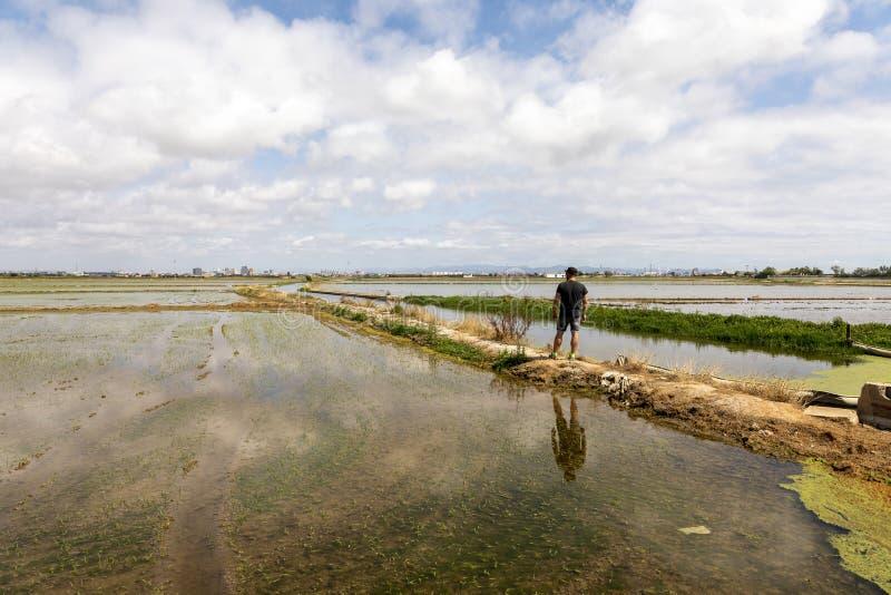 Hombre observando los campos del arroz cerca de Valencia imagenes de archivo