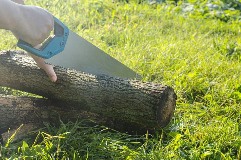 Hombre que asierra un árbol aserrado, aserrando un registro fotos de archivo
