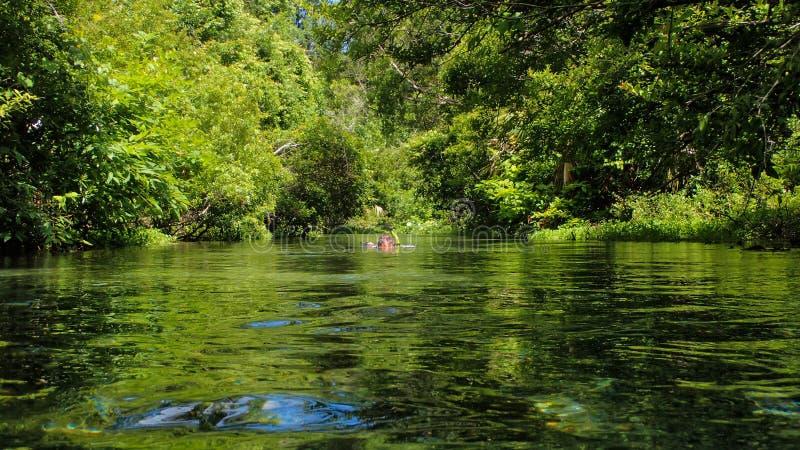 Hombre que bucea en una primavera de la Florida imagenes de archivo