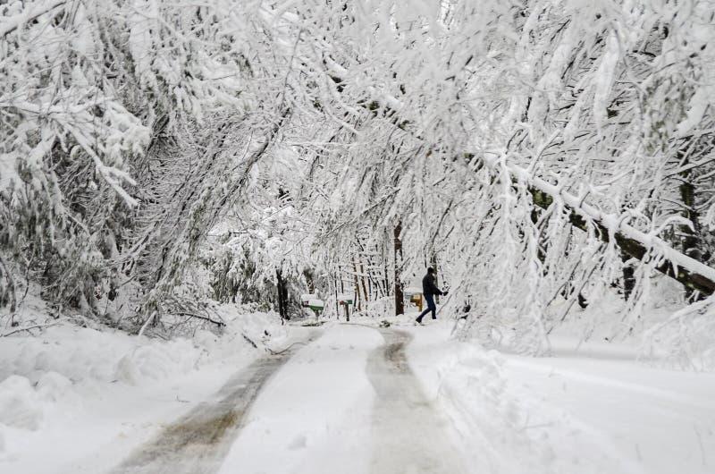 Hombre que camina en el camino con los árboles caidos en tormenta de la nieve del invierno imagen de archivo libre de regalías