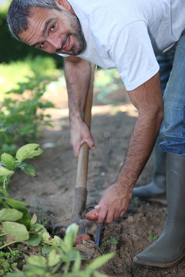 Hombre que cava una corrección vegetal fotografía de archivo