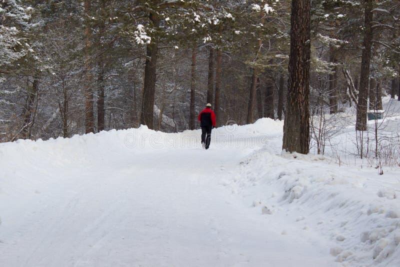 Hombre que corre en bosque fotografía de archivo