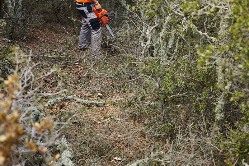 Hombre que corta árboles usando una motosierra eléctrica en el bosque fotografía de archivo libre de regalías