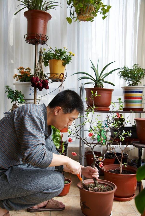 Hombre que cultiva un huerto foto de archivo libre de regalías