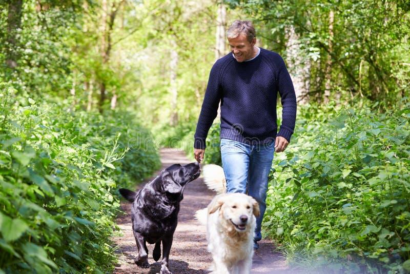 Hombre que ejercita perros en paseo del campo foto de archivo