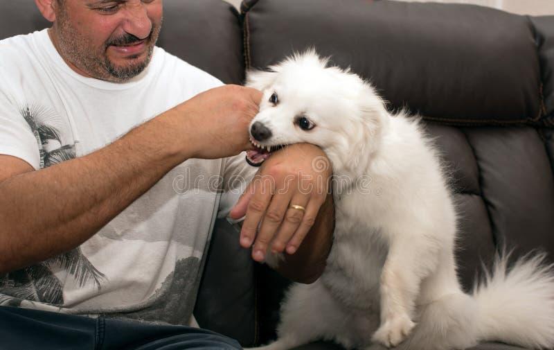 Hombre que es mordido por el perro imagen de archivo