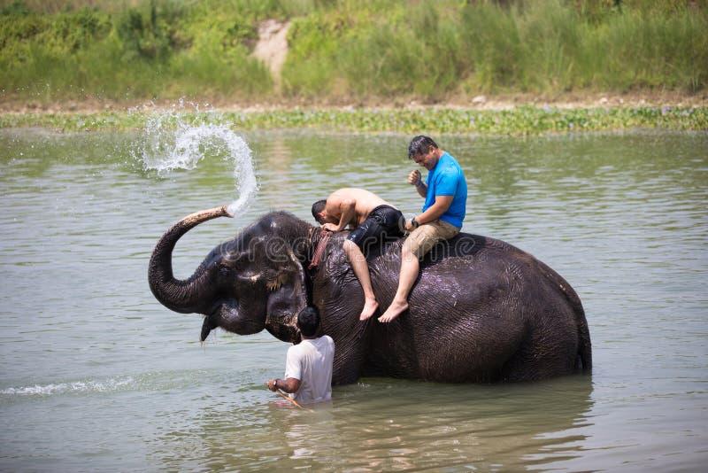 Hombre que lava un elefante en el río fotos de archivo libres de regalías