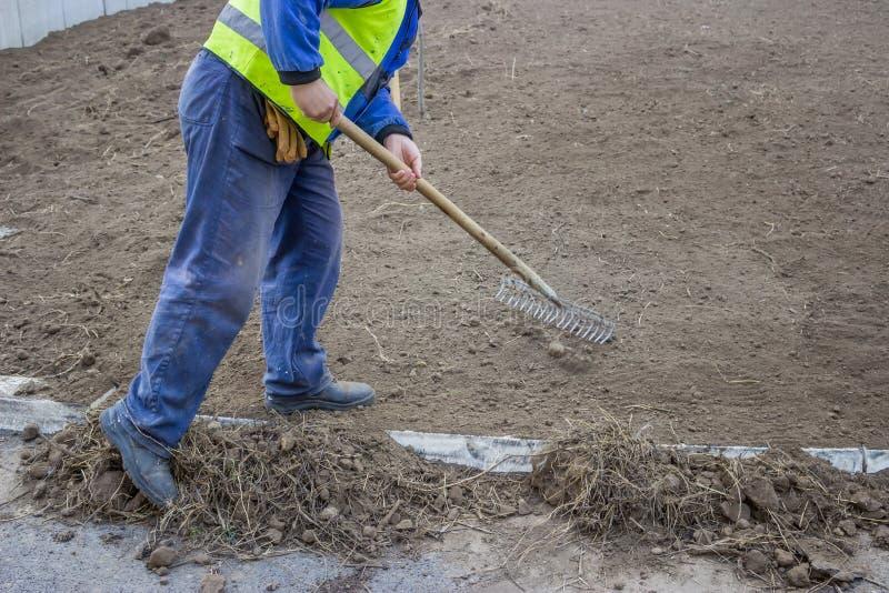 Hombre que rastrilla malas hierbas del suelo superior imagen de archivo