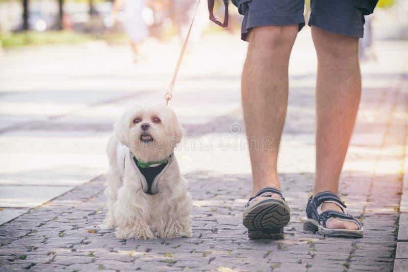 Hombre que recorre con el perro imagenes de archivo