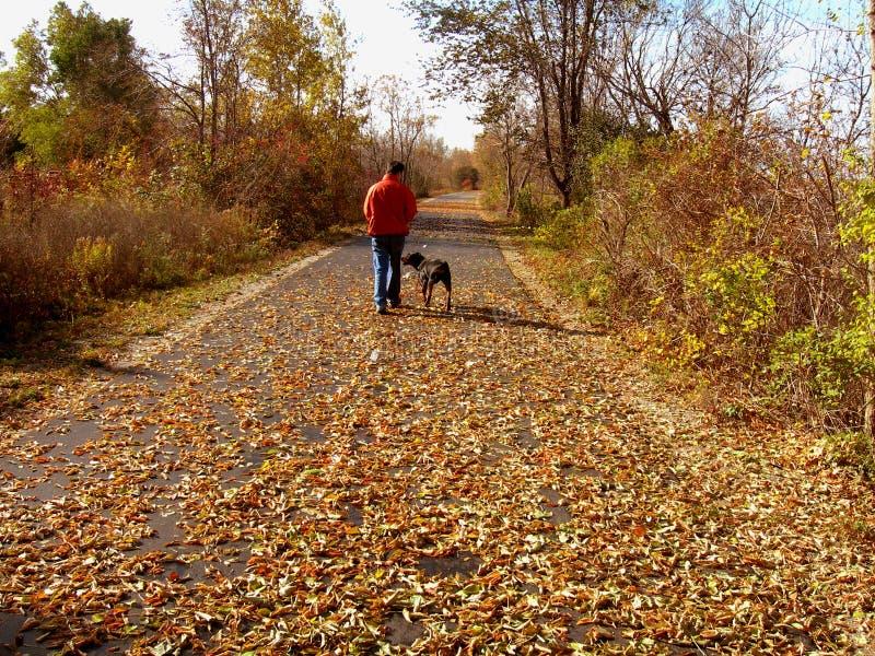Hombre que recorre el perro en otoño imagen de archivo libre de regalías