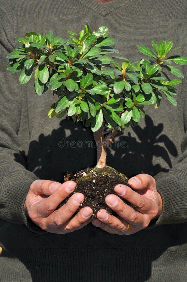 Hombre que sostiene el pequeño árbol en manos fotos de archivo libres de regalías