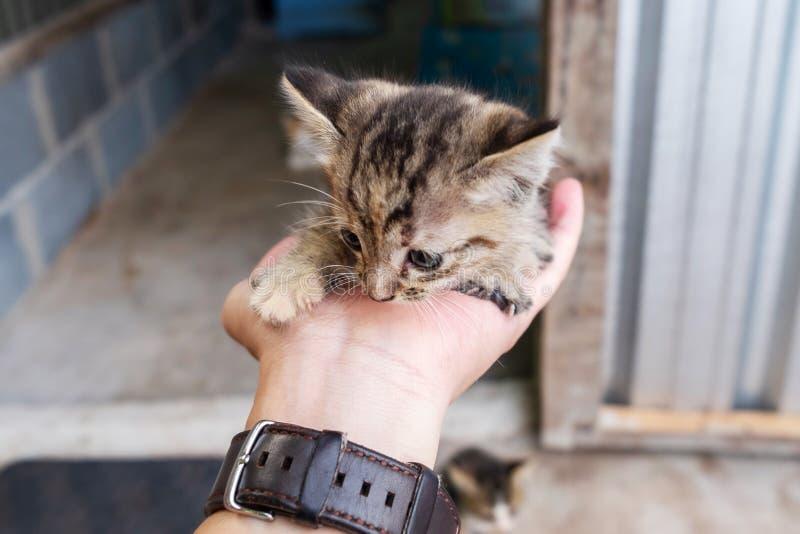 Hombre que sostiene un pequeño gatito lindo en su mano foto de archivo libre de regalías