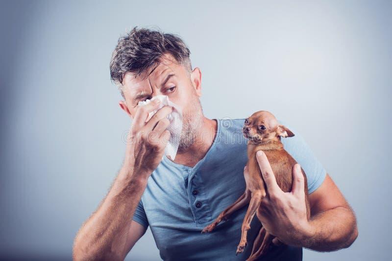 Hombre que tiene síntomas de la alergia del animal doméstico: mocos, asma foto de archivo libre de regalías
