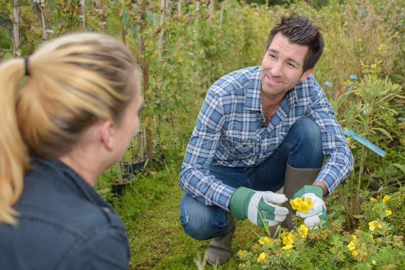 Hombre que toma las flores del cuidado imagen de archivo libre de regalías