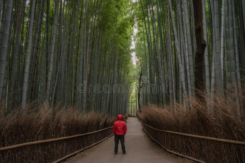 Hombre rojo en el bosque de bambú imagenes de archivo